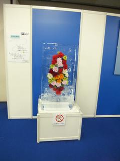 GEMCO flower in ice.jpg