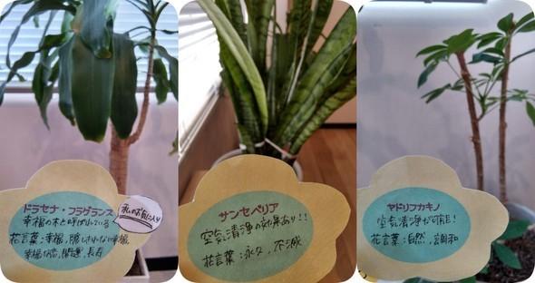 植栽3種コメント.jpg