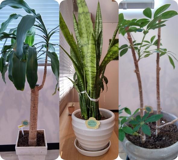 植栽3種.jpg